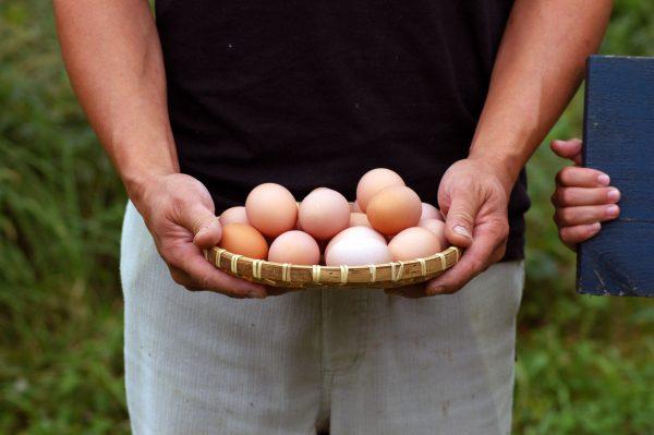 八雲で遊楽卵を使用したメニューがあるイタリアン